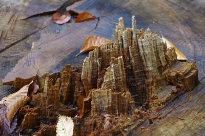 wood-975244_1920