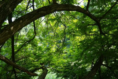 tree-141692_1920